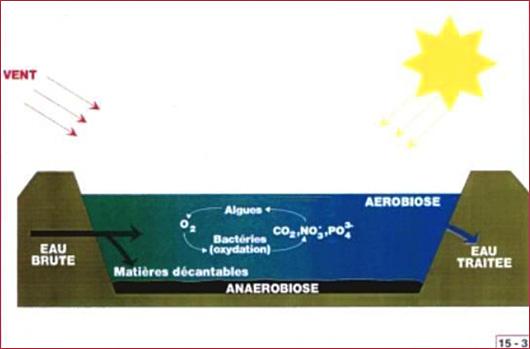 Site officiel de la commune de guevenatten 68210 haut rhin alsace - Lagunage des eaux usees ...